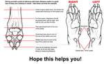 Realistic wolf paw anatomy - Mini guide