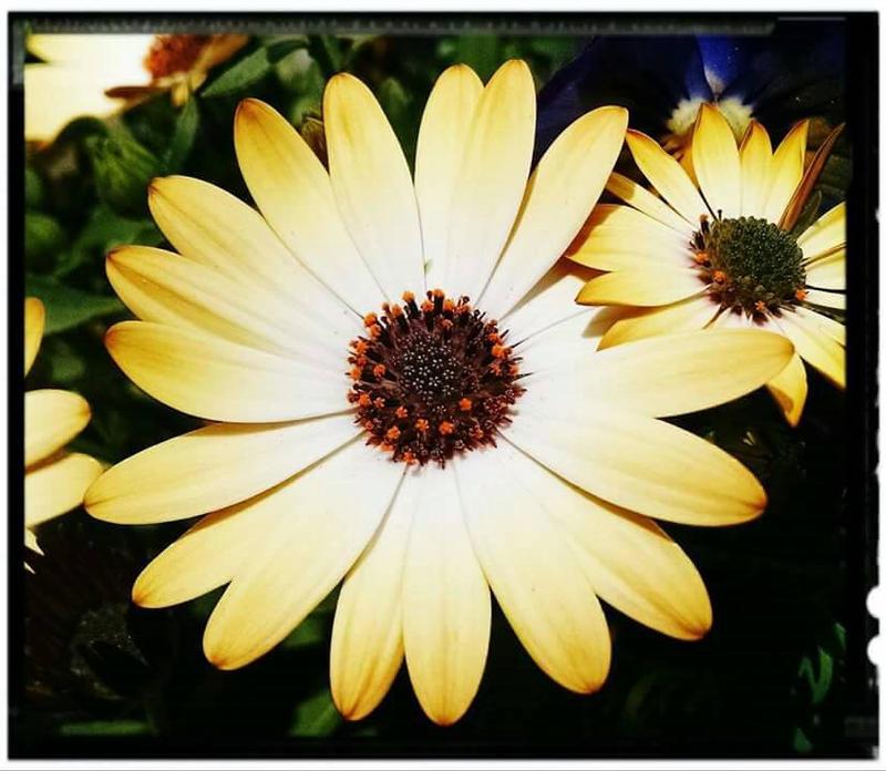 Mellow Yellow by jenepooh
