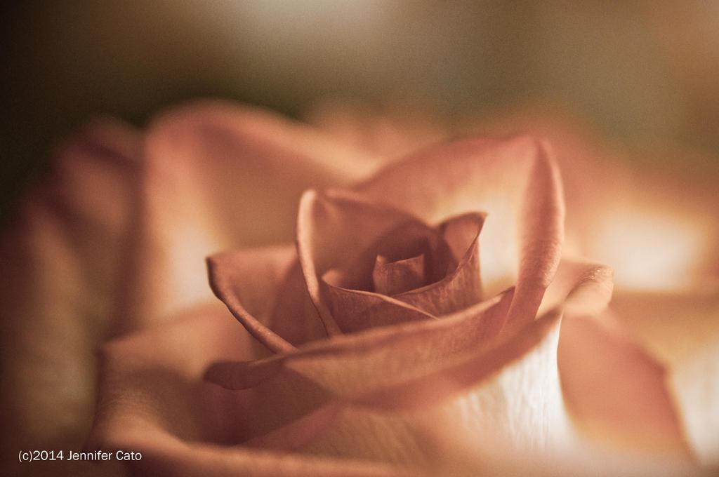 Lovely Pink by jenepooh