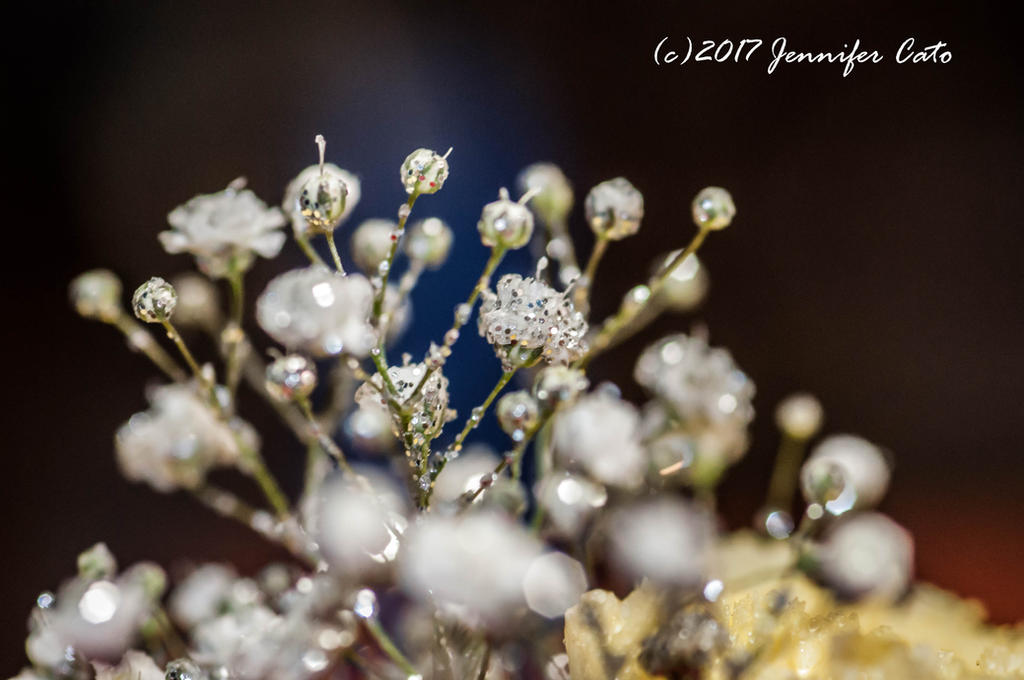 Glittery Babysbreath by jenepooh