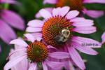 Bee Having Noms