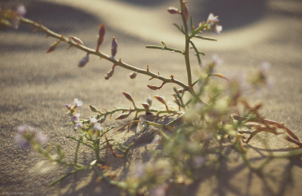 Sand plant by Anlin