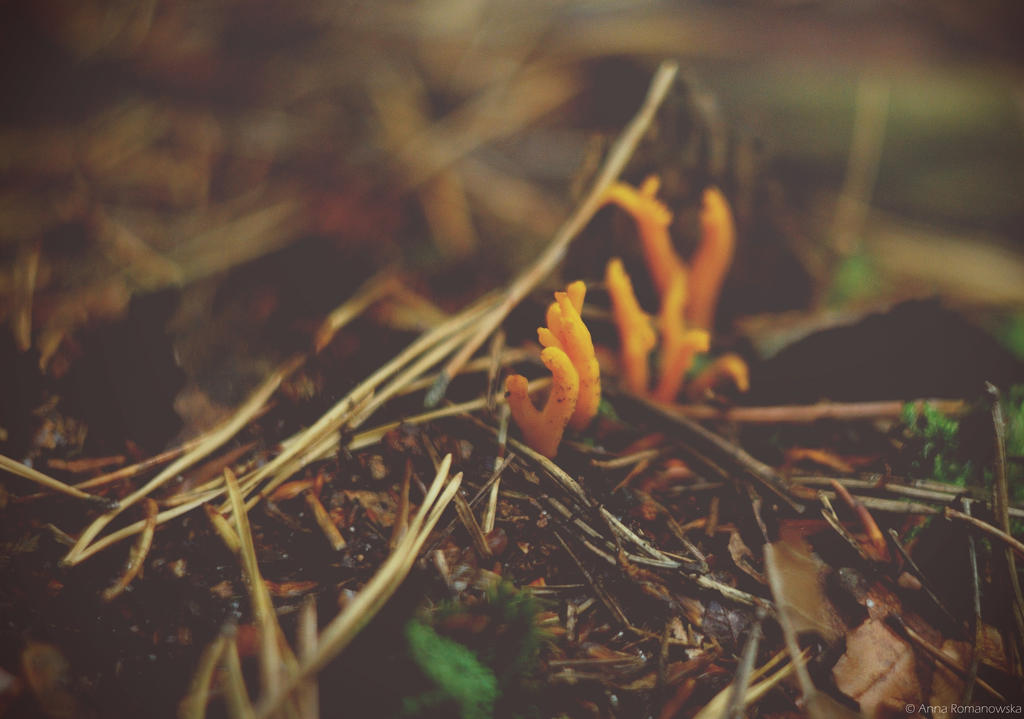 Orange alien from the ground by Anlin