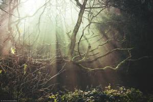 Fangorn forest by Anlin
