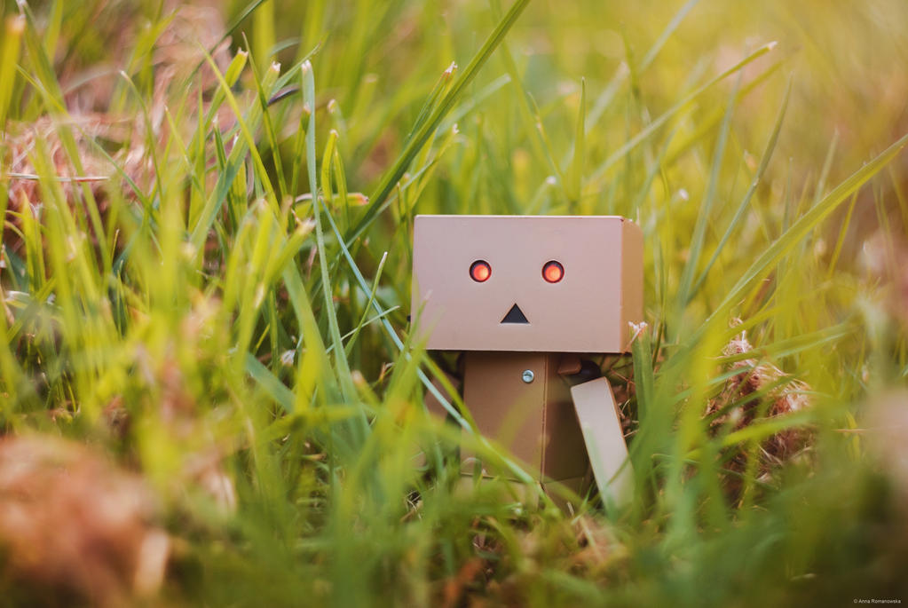 Danbo in green by Anlin