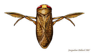 Corixidae
