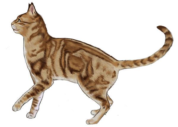 Cat external anatomy