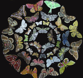 Moth Circles by JacquelineRae