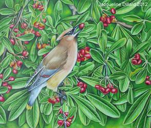 Cedar Waxwing by JacquelineRae