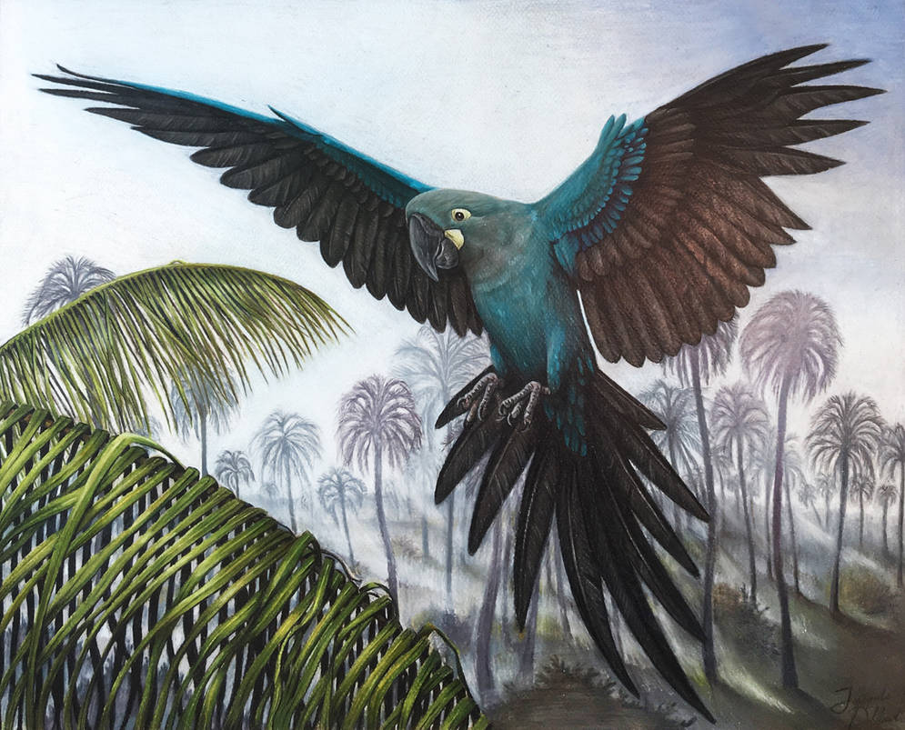Glaucous Macaw by JacquelineRae
