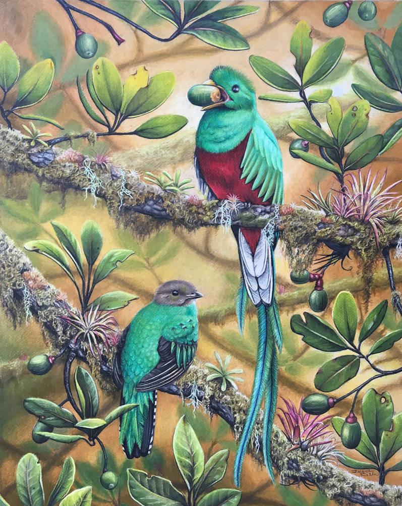 Resplendent Quetzal by JacquelineRae