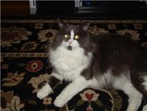 VVNova's Profile Picture