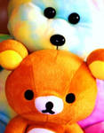 teddy n  teddy