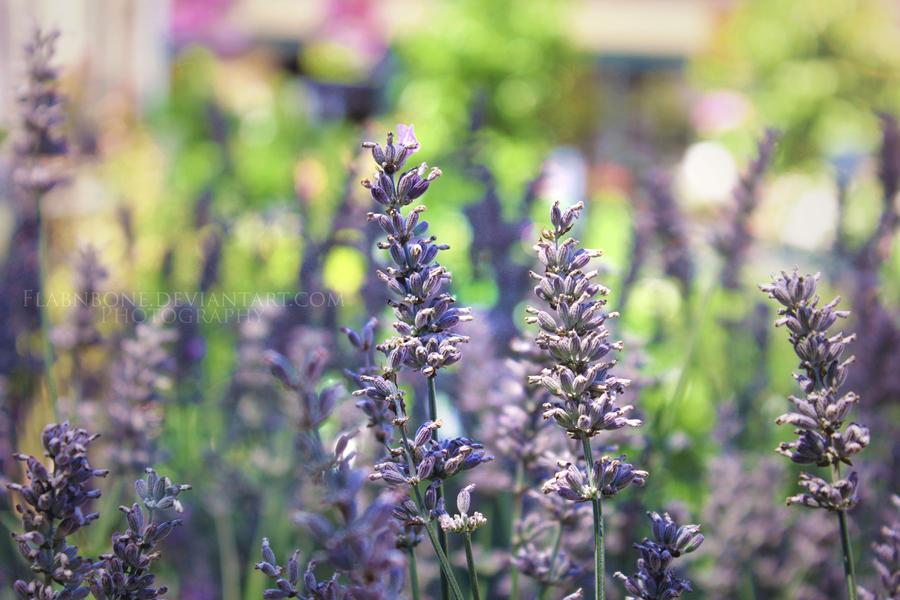 Lavender Garden by FlabnBone