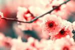 Sweet as Love by FlabnBone