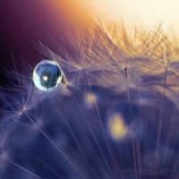 Pearls of Wisdom III by FlabnBone