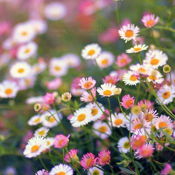 The Enchanted Garden II by FlabnBone