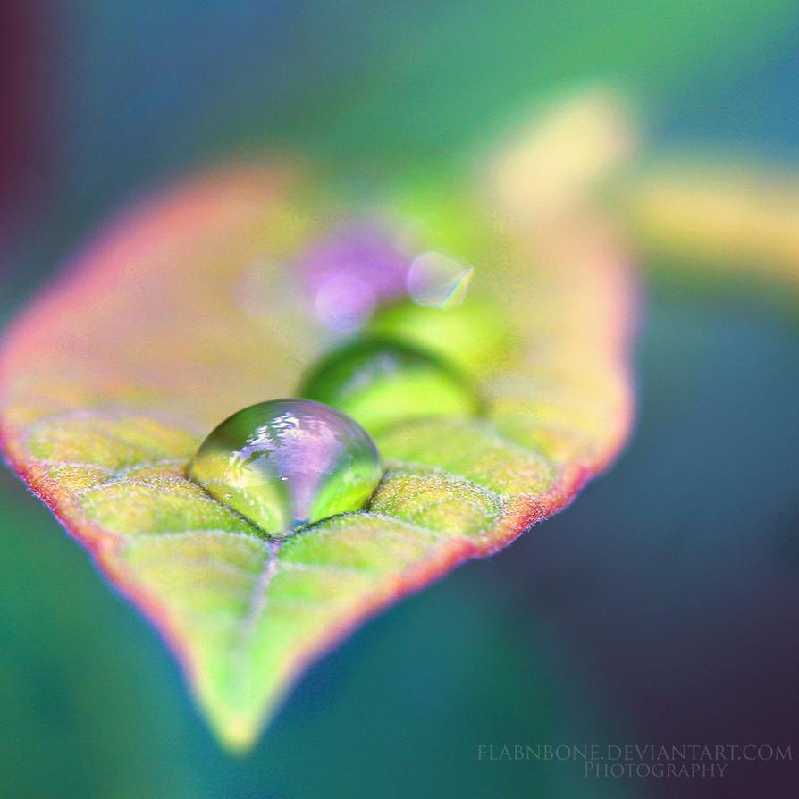 Delicate Petal by FlabnBone