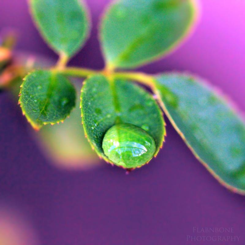 Delicate Petal II by FlabnBone