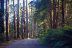 Down the Forest Road