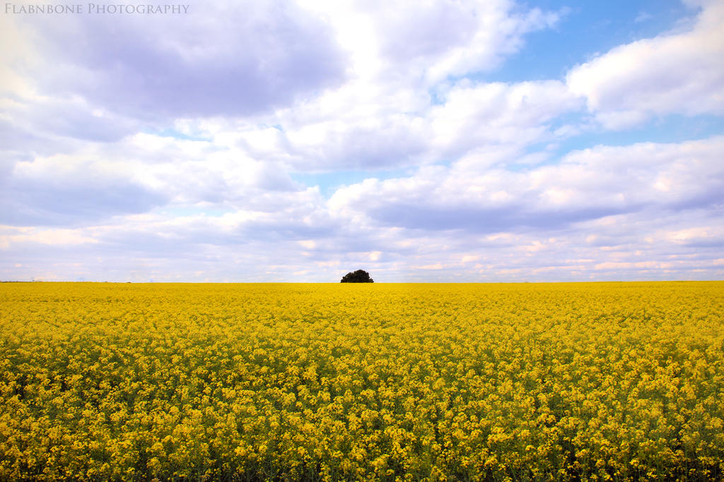 Fields of Gold by FlabnBone