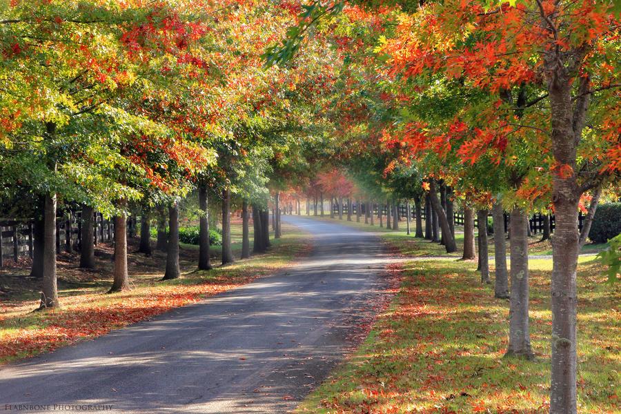 Autumn Days by FlabnBone