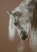 Horse by Laaurraa