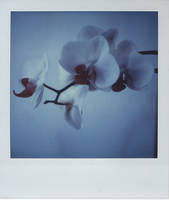 flowerpola 1 by Ungeheuer