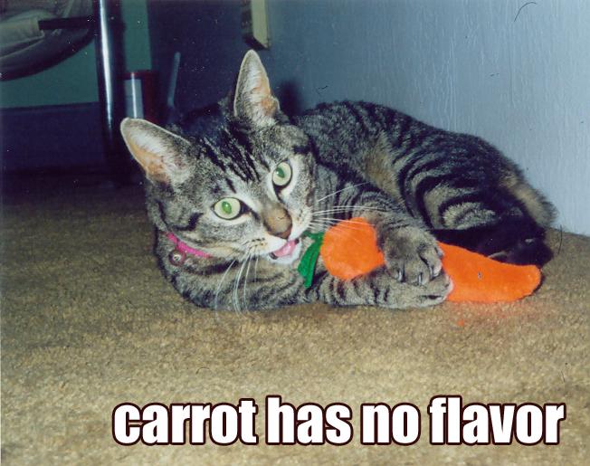 lolcat carrot