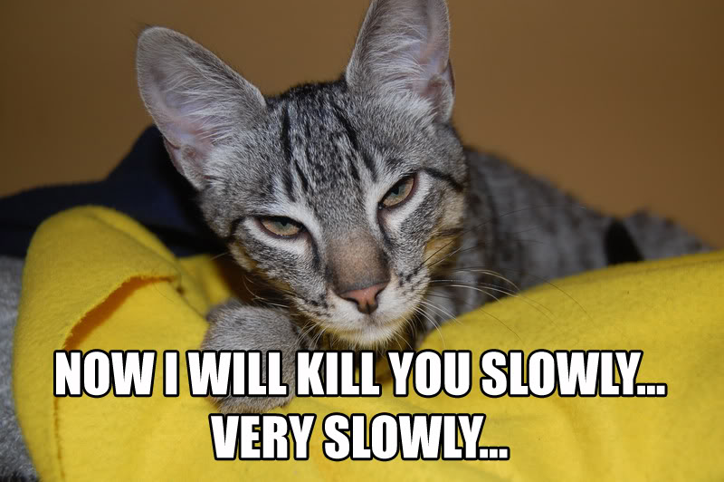 Now_I_Will_Kill_You_Slowly_by_LOL_Cat.jp