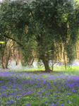 Tree in Bluebell Wood