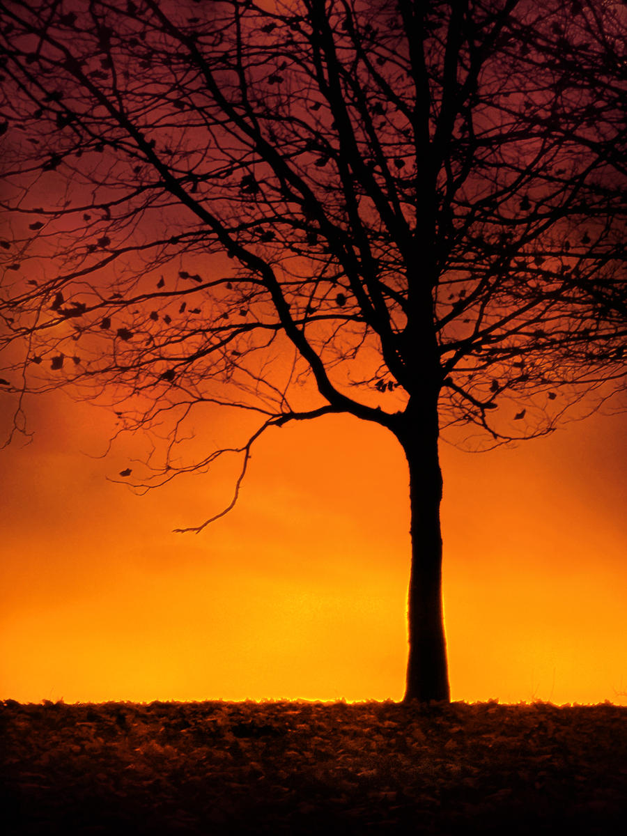 Trees Silhouette Sunset Tree Silhouette at Sun...