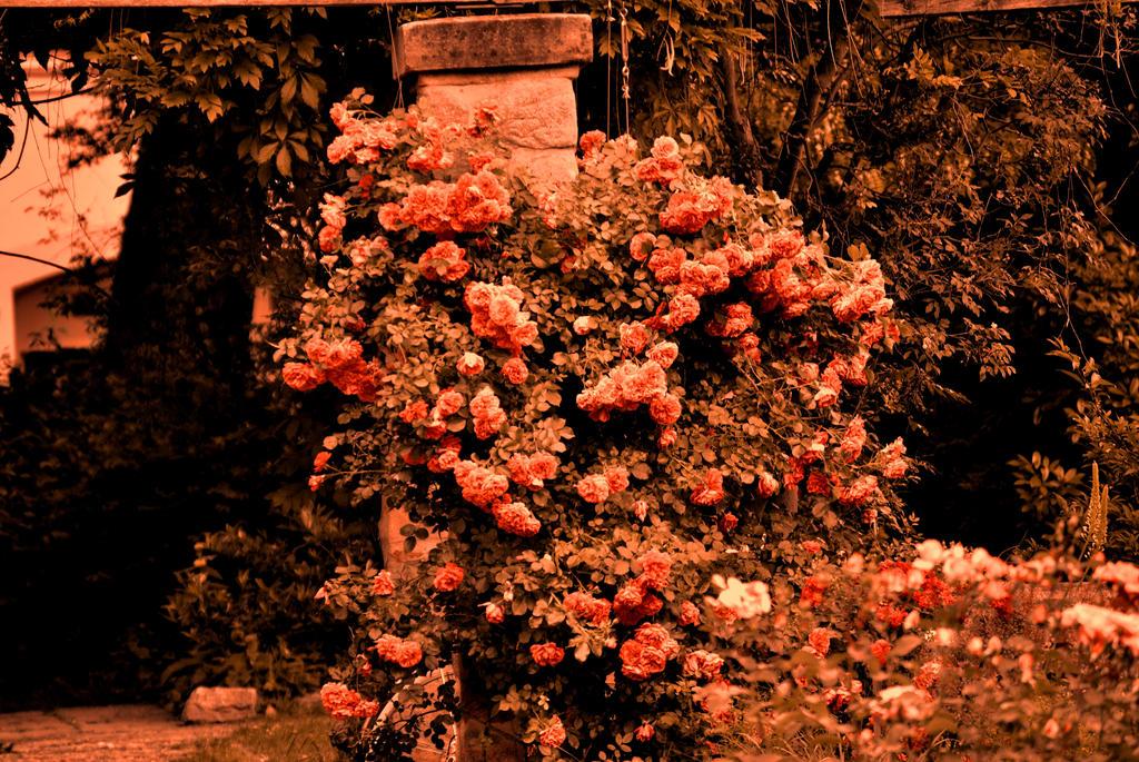 Beautiful Red Rose Garden Wallpaper Red Rose Garden by