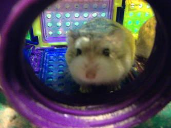 Robo Hamster by sariberrie