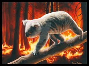 Koala Escaping Flames