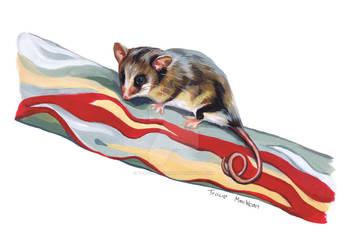Mountain Pygmy Possum. by TracieMacVean