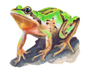 Alpine Tree Frog. by TracieMacVean