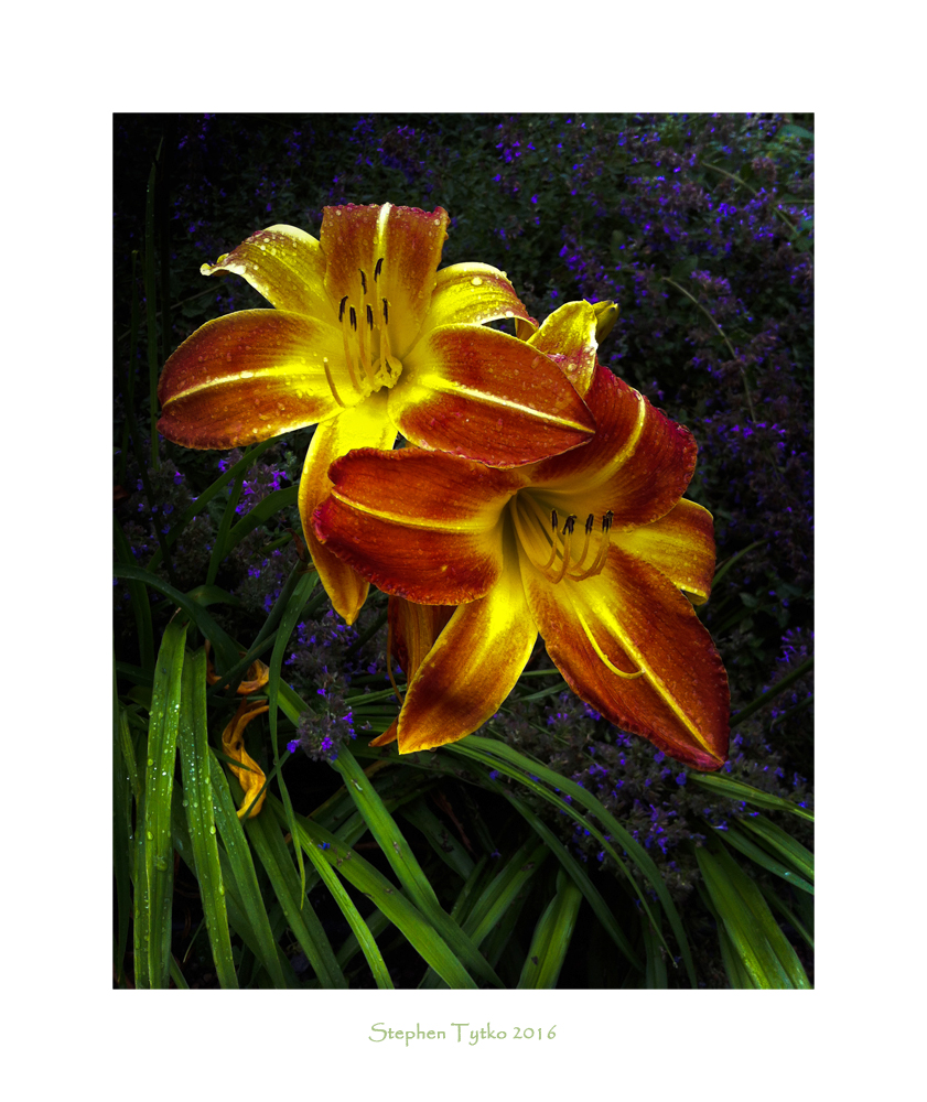 Another Daylily by liveaswedream