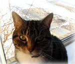 Window Cat Says Hi