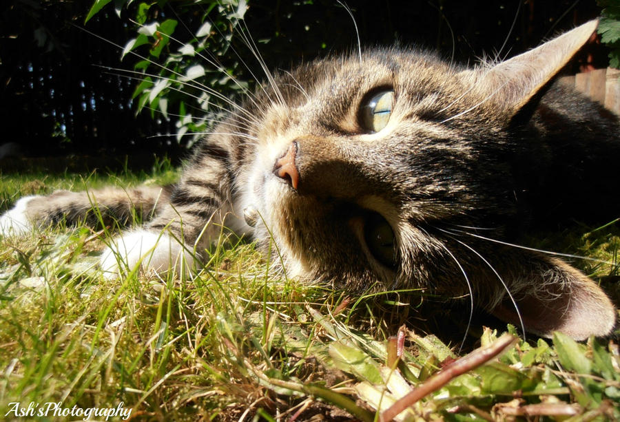 Funcky Black Cat Gabriel Mancino