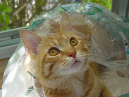 Lucy loves bags by lucytherescuedcat
