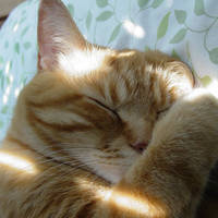 Love in the sun by lucytherescuedcat