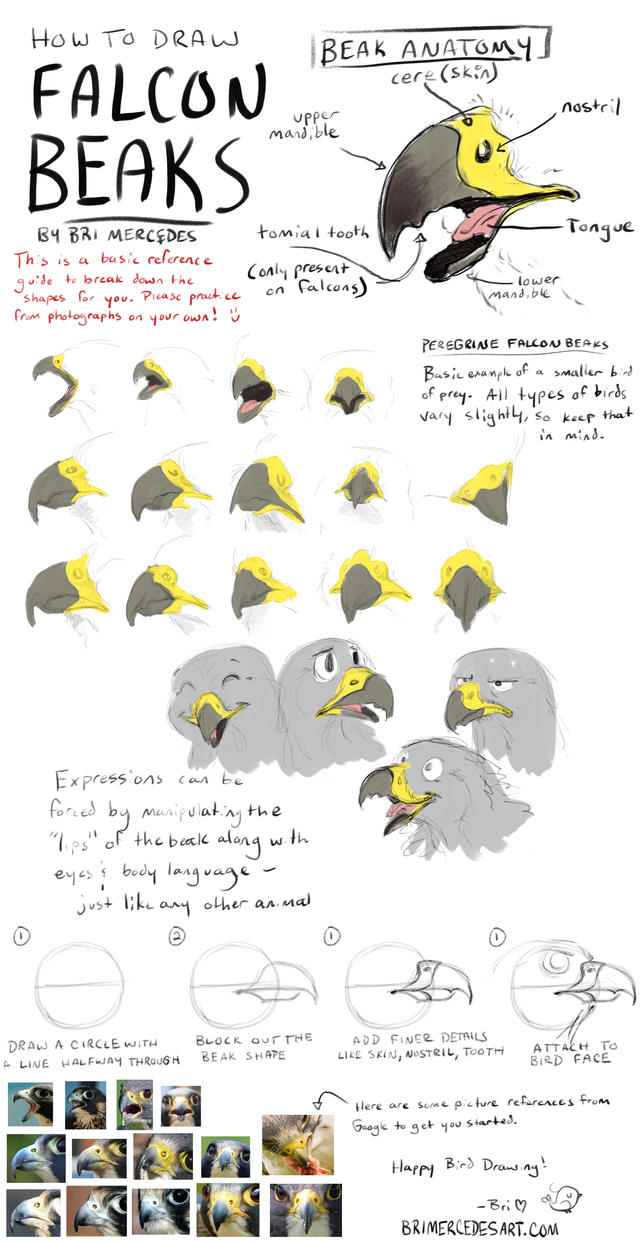 Tutorial: How To Draw Falcon Beaks by BriMercedes on DeviantArt