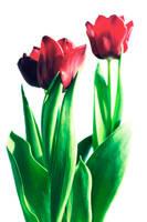 Flower by vladcoroeanu