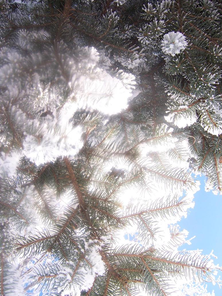 A Spruce's Light by Goldenear777