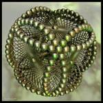 16 Holons in fractal