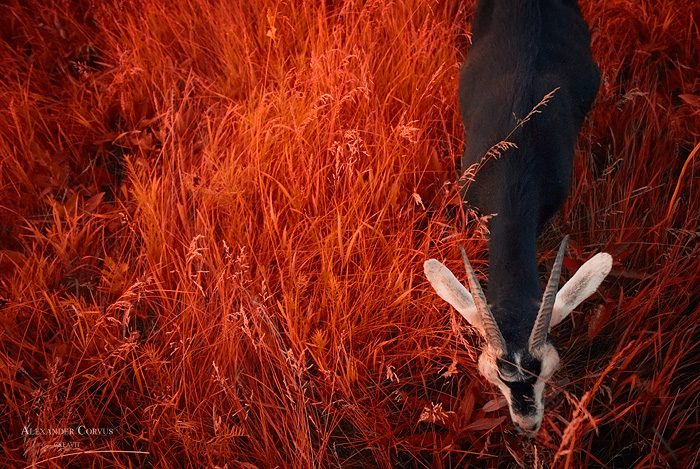 On The Autumn Grass by Thaess