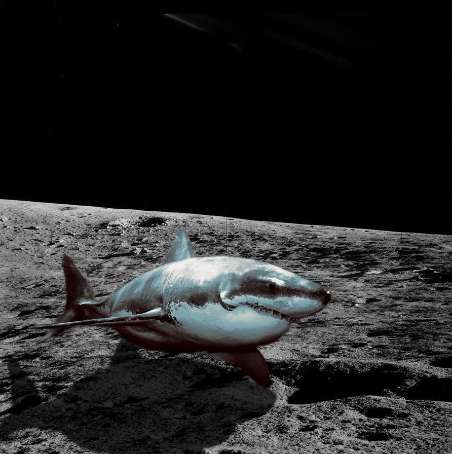 Moon Shark Wwwtopsimagescom