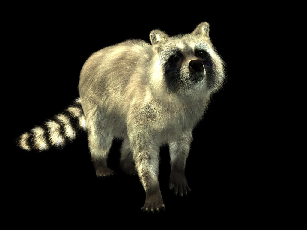Racoon by Lord-Crios
