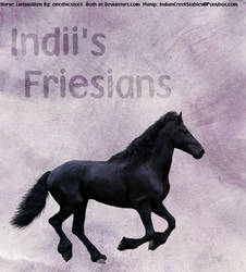 Friesian graphic by tuffride5